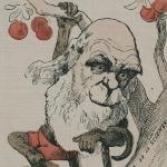 La traduction française de L'Origine des espèces de Darwin