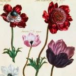 Le Jardin du très chrestien Henry IV, 1608