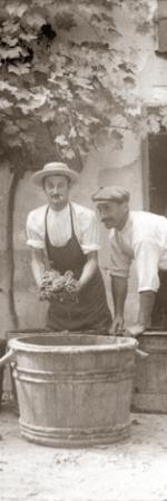 Vendangeurs foulant le raisin dans des cuves, fonds Trutat de la Bibliothèque de Toulouse