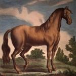 Illustrations de l'Histoire générale des animaux, 18e siècle