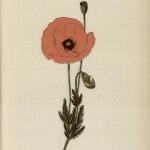Hariot, Atlas colorié des plantes médicinales indigènes, 1900