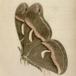 Papillons, par Étienne Berce, 1886