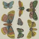 Histoire naturelle, Papillons, 1854