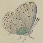 Phénomènes et métamorphoses : causeries sur les papillons, 1854