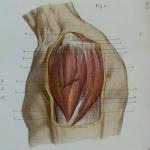 Traité d'anatomie topographique
